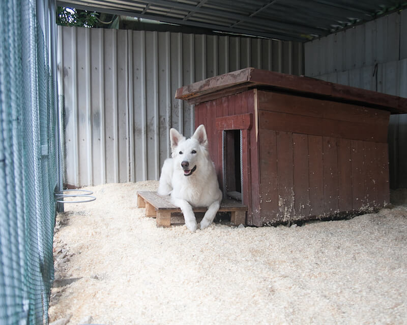 Pets hotel, outdoor facilities