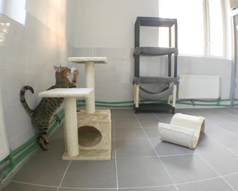 Pets hotel, cats rooms